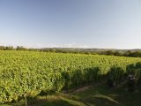 This vineyard in the South Downs is one of many in Sussex and Surrey that are open to visitors