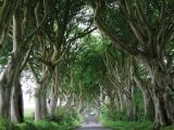 We visit Northern Ireland's National Trust properties, including the spooky Dark Hedges
