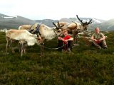 Head to the Highlands with your Valentine and feed reindeer when you visit Scotland