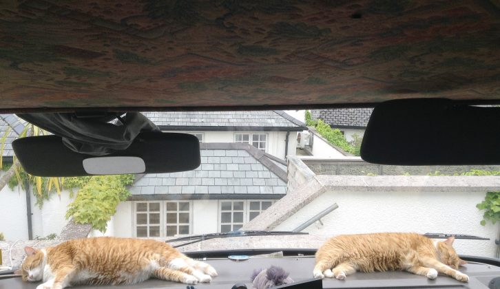 This is the life! Happiness for the cats is a warm motorhome dashboard