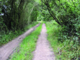The pathway to Waterperry Woods is a welcome haven of green tranquility
