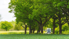 A motorhome surrounded by trees