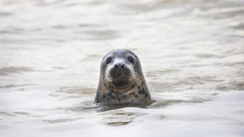 Brits on staycation are urged to do their bit for wildlife